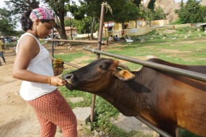 Feeding Cow, Hampi