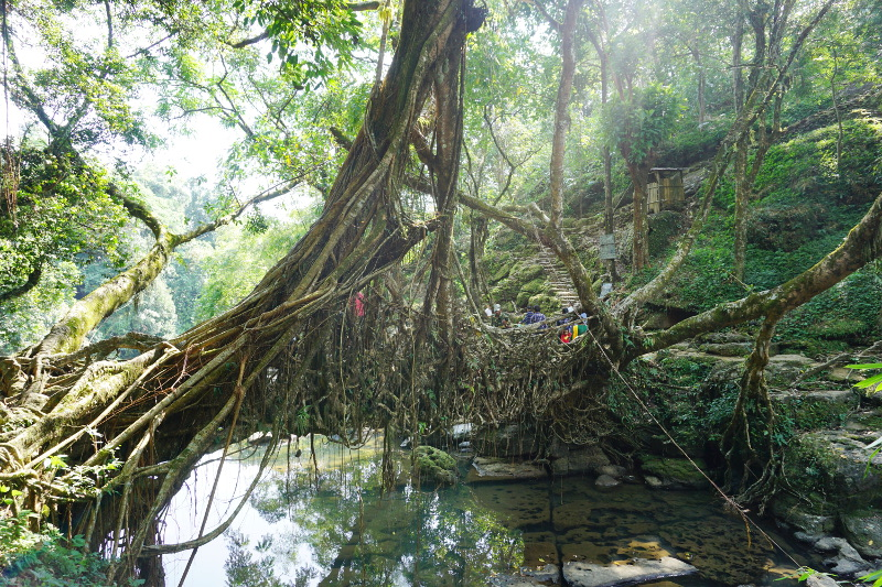 Root Bridge, Meghalaya, India
