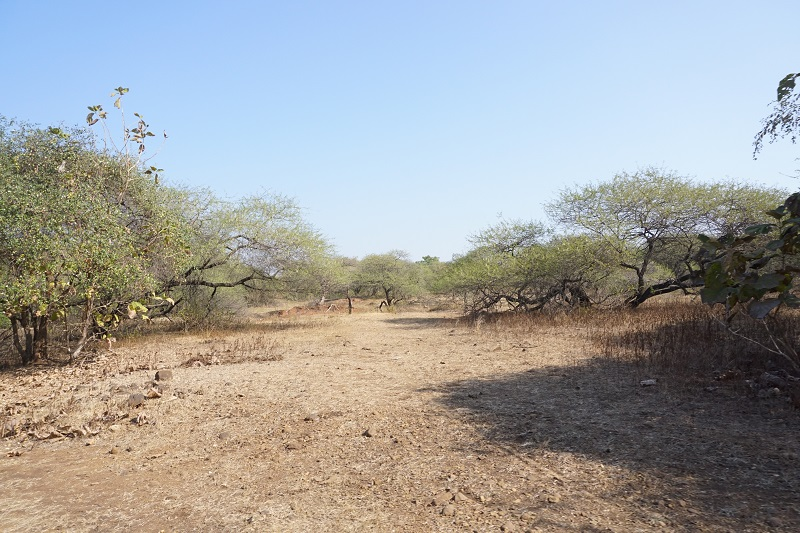 Gir Forest, Gujarat