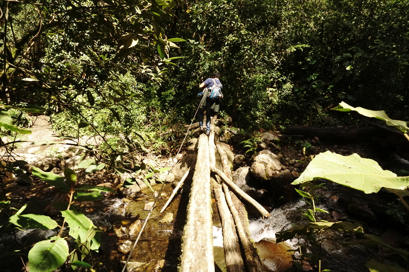 Log Bridge, Cocora Valley, Colombia