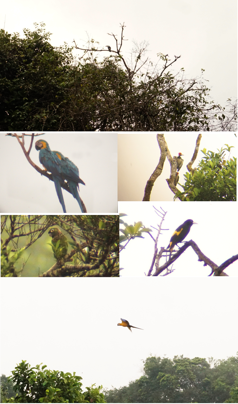 Birds Watching, Cuyabeno Reserve, Visit Amazon in Ecuador