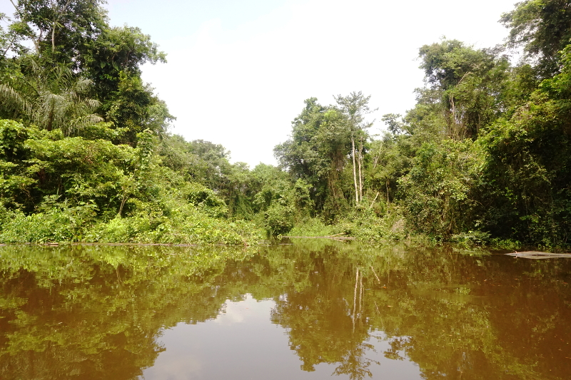 Cuyabeno River, Visit Amazon in Ecuador