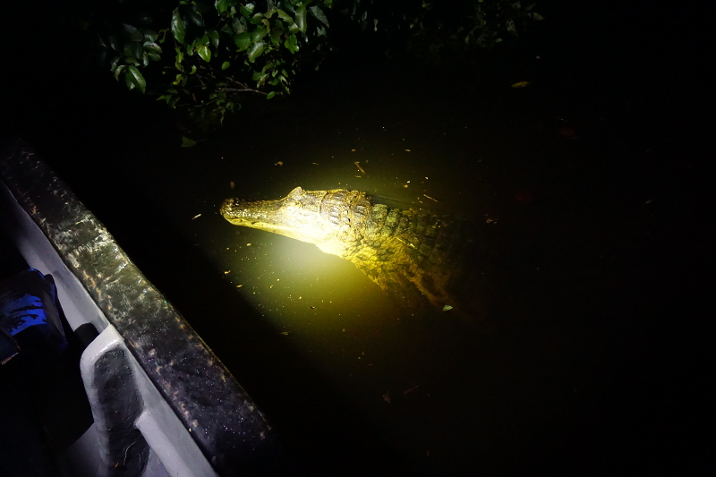 Caiman Spotting, Cuyabeno Reserve, Visit Amazon in Ecuador