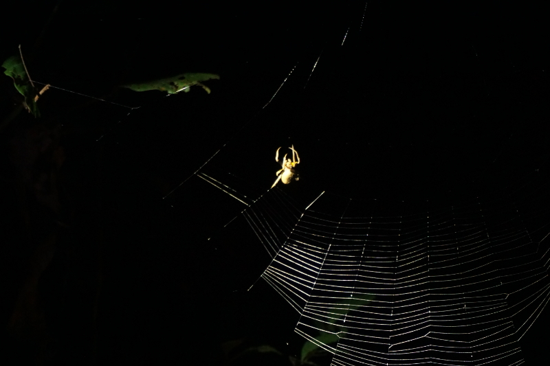 Spider, Cuyabeno Reserve, Visit Amazon in Ecuador