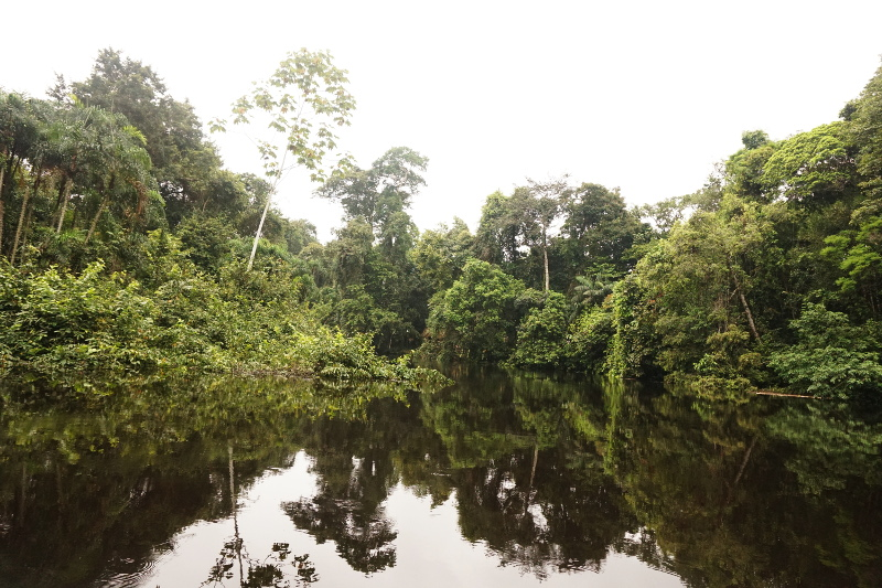 The peace of Amazon, Cuyabeno Reserve, Visit Amazon in Ecuador