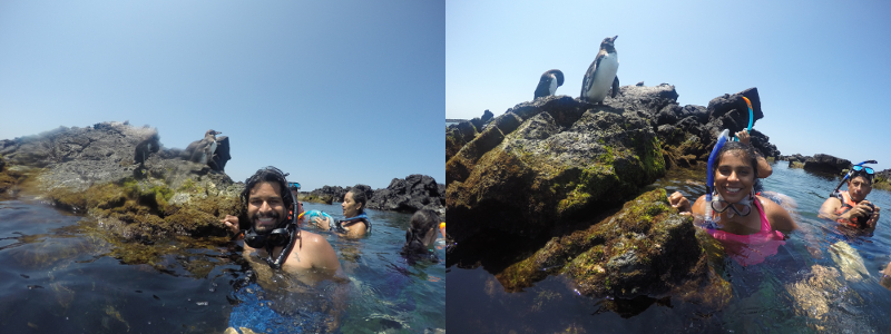 Selfie with Penguin, Tuneles, Isabela, Galapagos Islands