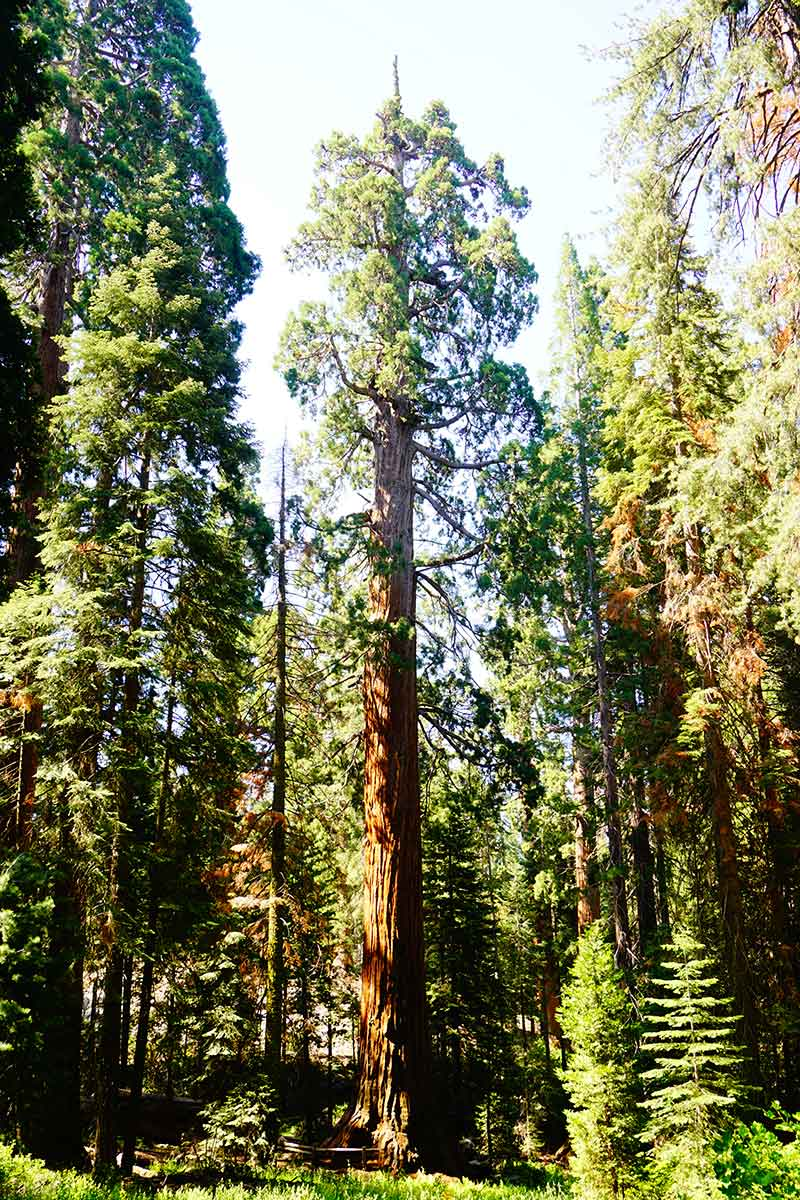 General Grant, Sequoia Trees, Kings Canyon National Park, California